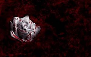 rose wallpaper: Blood Rose Wallpaper