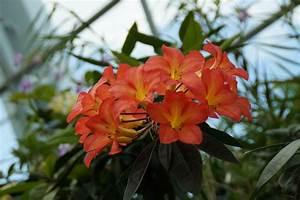 Blume Und Leben : blumen richtig fotografieren tipps f r sch ne pflanzenfotos ~ Articles-book.com Haus und Dekorationen