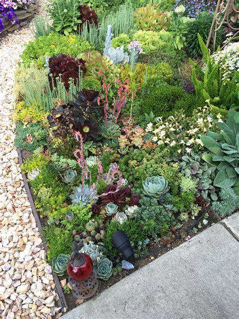 succulent front yard succulent garden front yard landscape landscaping chsbahrain com