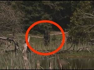 REAL SASQUATCH PROOF/EVIDENCE CAUGHT ON CAMERA IN 2015 ...