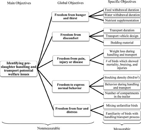 Flowchart Describing The Process For Developing Questions For The  Download Scientific Diagram