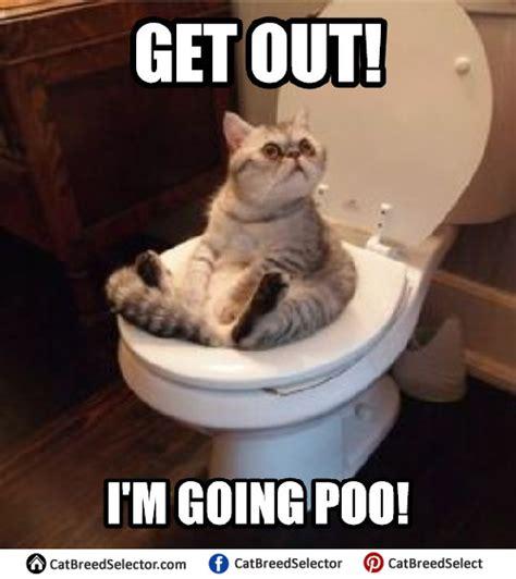 Silly Meme - cat memes cat breed selector