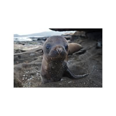 Another Galápagos Sea LionSean Crane Photography
