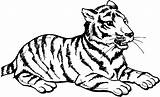 Tiger Coloring Pages Cub Animals Resting sketch template
