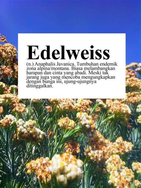 edelweiss wiki pinterest