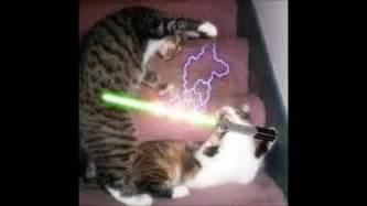 cat war wars cats