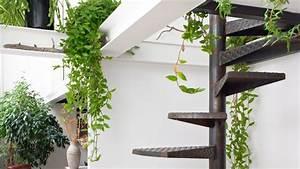 Plante Balcon Facile D Entretien : d co nature la tendance des plantes d 39 int rieur c t ~ Melissatoandfro.com Idées de Décoration