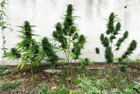 Best Tips For Outdoor Growing