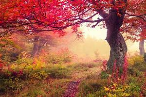 Autumn landscape with Fog scenery image - Free stock photo - Public Domain photo - CC0 Images