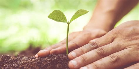how to plant trees it s time to celebrate and protect our soils huffpost uk