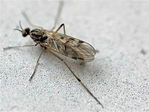 Was Essen Mücken : vier millionen m cken get tet fang wiegt 1 5 kilo rekorde boulevard ~ Frokenaadalensverden.com Haus und Dekorationen