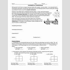 16 Best Images Of Incomplete And Codominance Worksheet Answers  Incomplete And Codominance