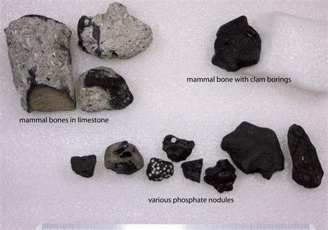 bones sinking like stones traducida 49 bones and sand u201d archaeology 100 myth