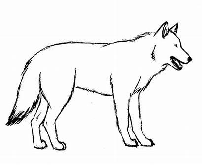 Shepherd German Wolf Husky Hybrid Telling Trouble