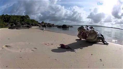 saltwater crocodile attacks camera youtube