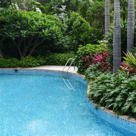 best plants around swimming pool swimming pool designs in ground pool ideas