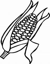 Corn Coloring Ear Candy Pages Drawing Getdrawings Cob Stalk Printable Getcolorings Colouring Clipart Print sketch template