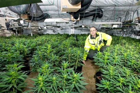 Gw Pharamaceuticals Reveals Cannabis Treatments But