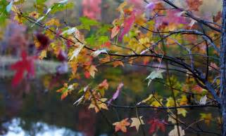 file autumn tree leaf colors bokeh lake west virginia forestwander jpg