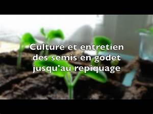 Quand Semer Les Tomates : culture et entretien des semis en godet jusqu 39 au repiquage ~ Melissatoandfro.com Idées de Décoration