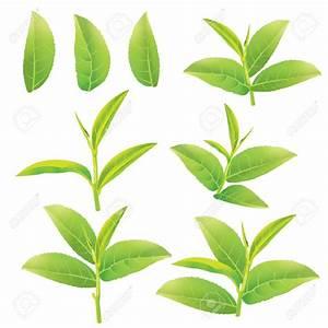 45+ Free Tea Leaf Clip Art