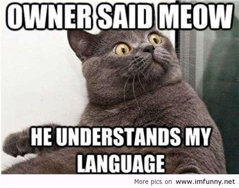Top 35 Most Funniest Cat Quotes  Quotes Words Sayings