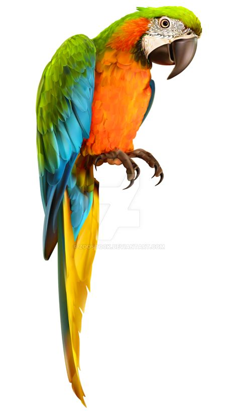 Images Transparent Background by Parrot Bird On A Transparent Background By Zoostock On