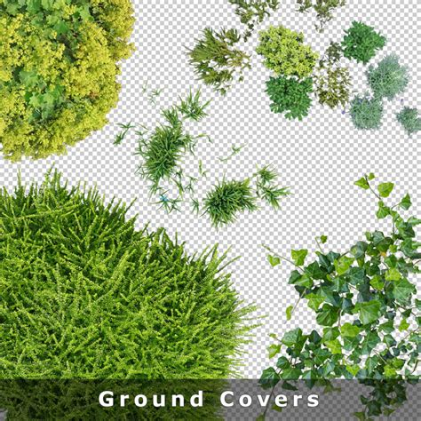 open floor plans top view plants 01 cutout plan view plant graphics png