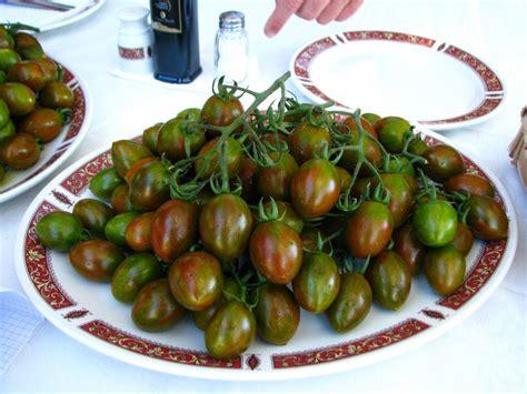 pianta  pomodoro  crispino plum vaso  cm societa