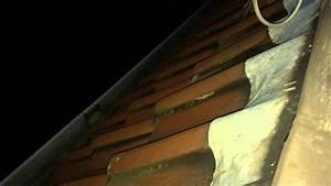 Marder Vom Dachboden Vertreiben : steinmarder im innendach ger usch marder youtube ~ Watch28wear.com Haus und Dekorationen