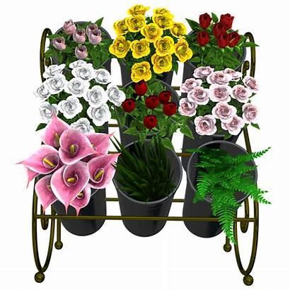 Vase Flower Flowers Bouquet Arrangement Bouquets Pixel