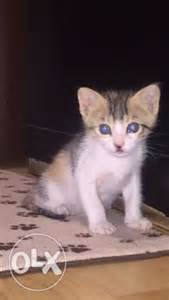 baby cats for adoption bh