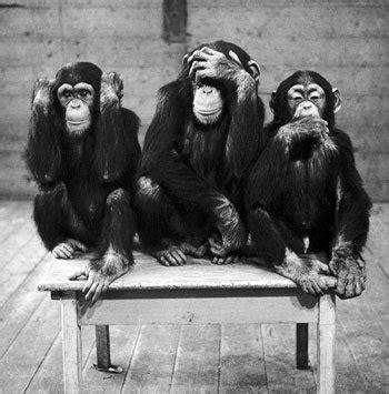 wise monkeys executive  life coaching courses