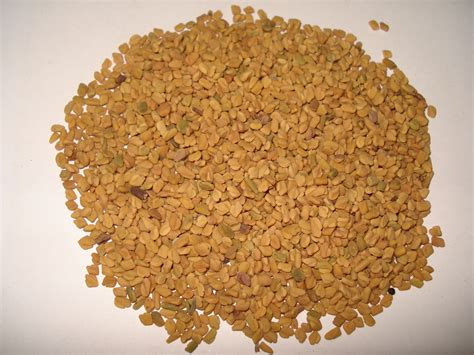 Filefenugreek Seed Wikimedia Commons
