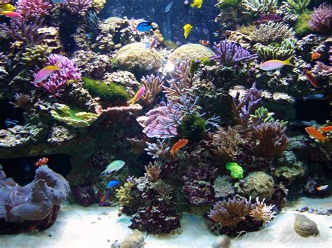 land and water aquarium land and water animals heartspectrum