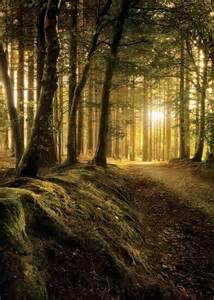 Beautiful Forest Landscape