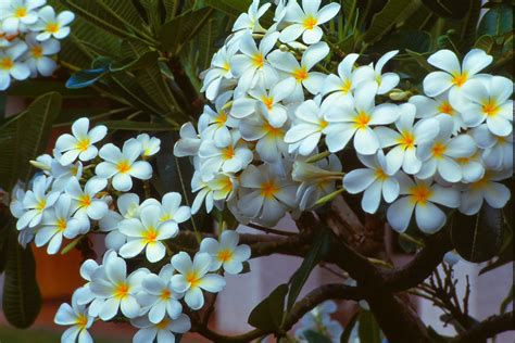 popular flowers blok888 top 10 most beautiful flowers in the world 2