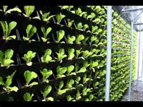 easy vertical green wall design ideas youtube