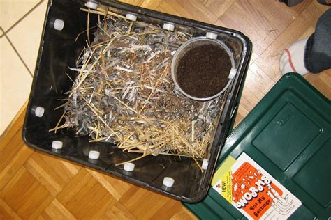 compost vermicomposting worms speed production using bin
