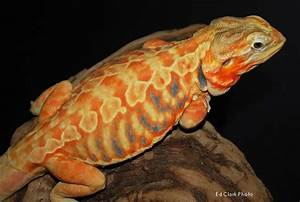 1000+ images about Reptiles on Pinterest | Python ...