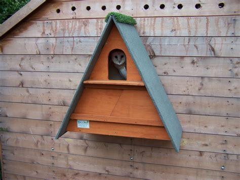 golden brown barn owl box  owl box