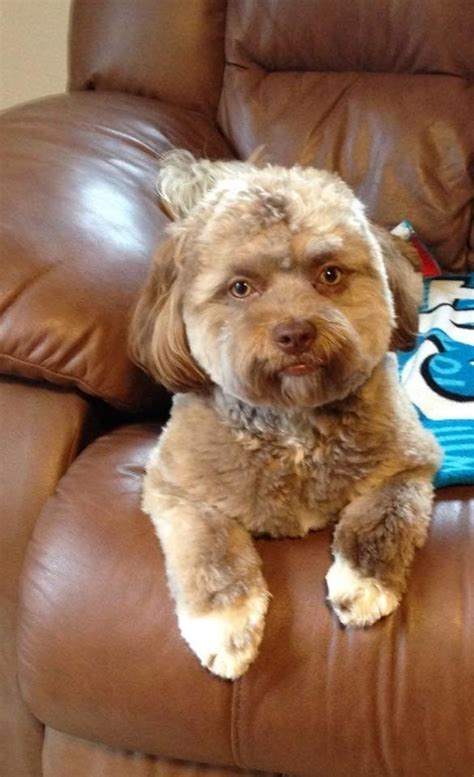 This Dog Has A Human Face Funny Baby Faces Baby Animals