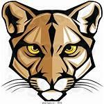 Clipart Cougar Clip Pumas Cartoon Panther Florida
