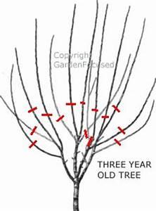 Bäume Verschneiden Obstbäume : die besten 25 pflaumenb ume beschneiden ideen auf ~ Lizthompson.info Haus und Dekorationen
