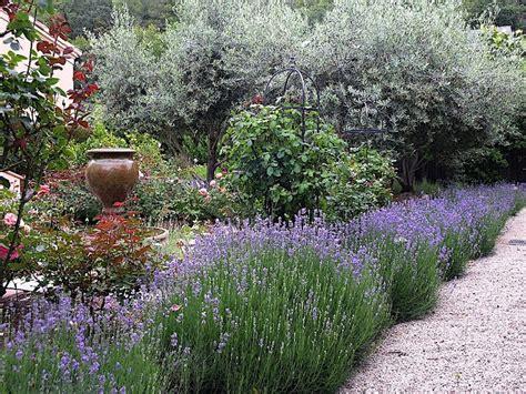 lavender hedge images lavender hedge lavender lover pinterest