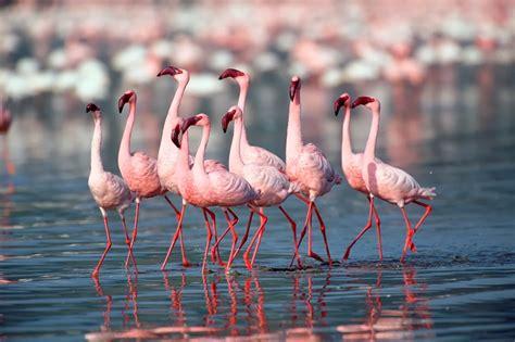 indian home interior design photos nest by tamara pink flamingos for the home summer 2017