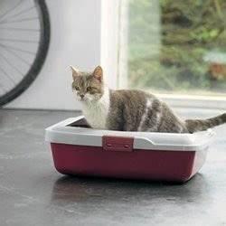 Litiere Chat Sans Odeur : quelle liti re pour chat choisir accueillir son chat wamiz ~ Melissatoandfro.com Idées de Décoration