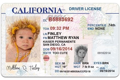 blank california driver s license template send 1 california drivers license photoshop templat