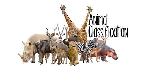 Animal Classification Animal classification Animal