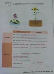 Study Guide 2  Adaptations Of Living Things To The